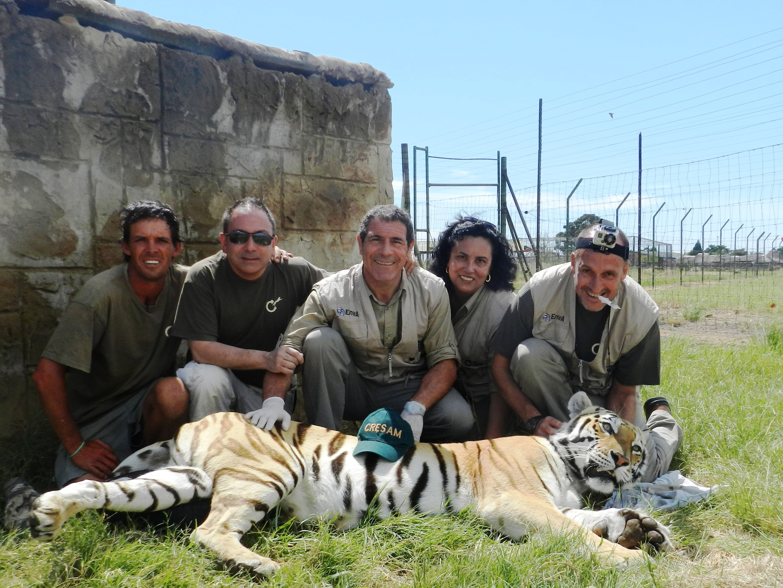 拯救濒临灭绝的动物的英语海报